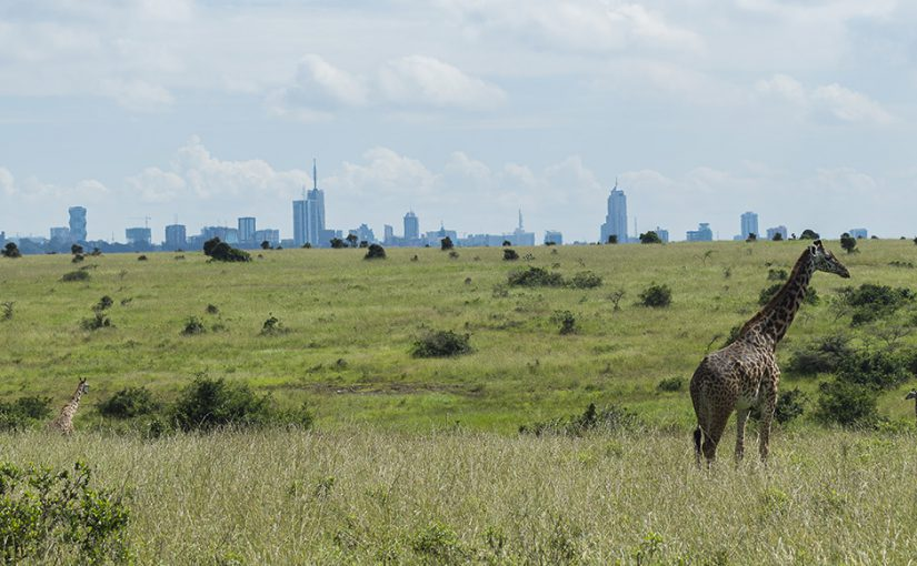 Things to do in Nairobi National Park