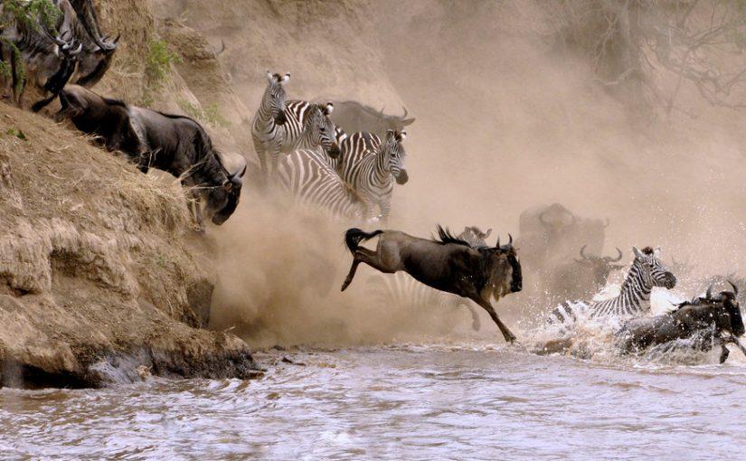 What Makes Masai Mara Park A Unique Kenya Safari Destination